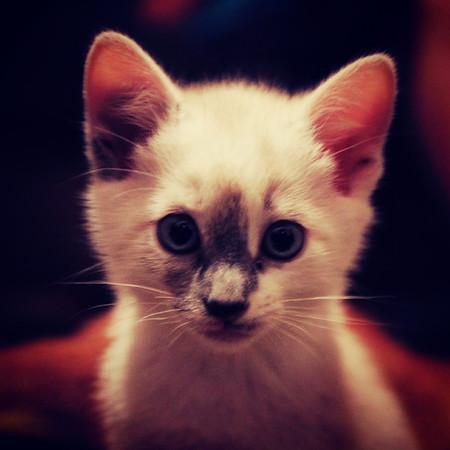John Paul's new kittens 9-23-2012